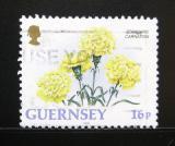 Poštovní známka Guernsey 1992 Karafiáty Mi# 561