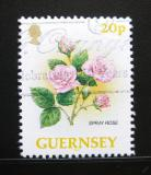 Poštovní známka Guernsey 1992 Růže Mi# 562