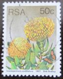 Poštovní známka JAR 1977 Leucospermum cordifolium Mi# 526 A