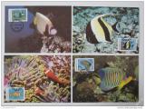 Maxikarty Maledivy 1986 Ryby, WWF 041 Mi# 1198-1201
