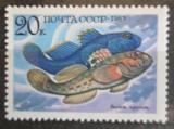 Poštovní známka SSSR 1983 Neogobius melanostomus Mi# 5297