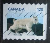 Poštovní známka Kanada 2014 Kamzík bělák Mi# 3089