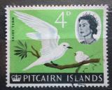 Poštovní známka Pitcairnovy ostrovy 1964 Nody bělostný Mi# 43