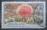 Poštovní známka Svazijsko 1980 Haemanthus multiflorus Mi# 348