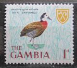 Poštovní známka Gambie 1966 Husička vdovka Mi# 211