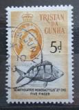 Poštovní známka Tristan da Cunha 1960 Acantholaria monodactylus Mi# 35