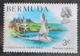Poštovní známka Bermudy 1978 Faeton žlutozobý Mi# 352