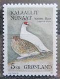 Poštovní známka Grónsko 1987 Bělokur horský Mi# 176