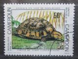 Poštovní známka Kamerun 1981 Želva Mi# 952