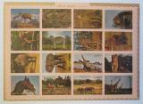 Poštovní známky Umm al-Kuvajn 1972 Fauna neperf. TOP SET Mi# 1002-17 B Kat 25€
