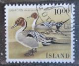 Poštovní známka Island 1986 Ostralka štíhlá Mi# 645