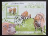 Poštovní známka Komory 2009 Štětkoun africký Mi# Block 527 Kat 15€