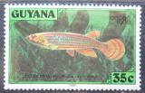 Poštovní známka Guyana 1980 Halančíkovec skvrnoocasý Mi# 583