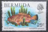 Poštovní známka Bermudy 1979 Epinephelus guttatus Mi# 361