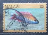 Poštovní známka Malawi 1984 Trematocranus jacobfreibergi Mi# 414 I