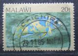 Poštovní známka Malawi 1984 Pseudotropheus zebra Mi# 416 I
