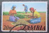 Poštovní známka Zambie 1975 Sklizeň arašídů Mi# 150