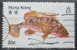 Poštovní známka Hongkong 1981 Epinephelus akaara Mi# 368
