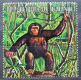 Poštovní známka Burundi 1971 Šimpanz učenlivý Mi# 738