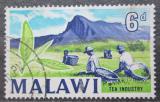 Poštovní známka Malawi 1964 Sběr čaje Mi# 6