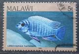 Poštovní známka Malawi 1984 Labeotropheus fuelleborni Mi# 411 I