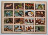Poštovní známky Umm al-Kuvajn 1972 Ptáci neperf. Mi# 1402-17 B Kat 25€