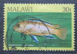 Poštovní známka Malawi 1984 Tlamovec černoploutvý Mi# 417 I
