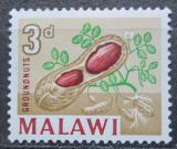 Poštovní známka Malawi 1964 Podzemnice olejná Mi# 4