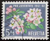 Poštovní známka Švýcarsko 1962 Květiny Mi# 758