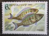 Poštovní známka SSSR 1983 Okoun Mi# 5295