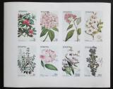 Poštovní známky Staffa, Skotsko 1982 Květiny neperf., vzácné Mi# N/N