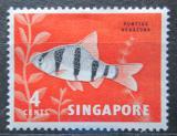 Poštovní známka Singapur 1962 Barbus pentazona hexazona Mi# 55