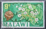 Poštovní známka Malawi 1964 Vernicia fordii Mi# 6