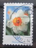 Poštovní známka Německo 2006 Narcis Mi# 2515
