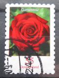 Poštovní známka Německo 2008 Růže Mi# 2675