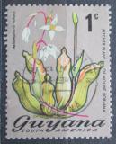 Poštovní známka Guyana 1972 Heliamphora nutans Mi# 395