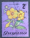 Poštovní známka Guyana 1971 Alamanda počistivá Mi# 396