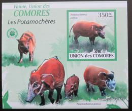 Poštovní známka Komory 2009 Štìtkoun africký neperf. Mi# 2434 B
