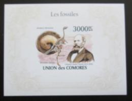 Poštovní známka Komory 2009 Fosílie, pravìk Mi# Block 564 B