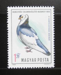 Poštovní známka Maïarsko 1969 Výstava holubù Mi# 2562