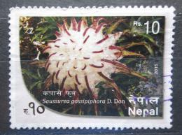 Poštovní známka Nepál 2015 Saussurea gossipiphora Mi# 1207