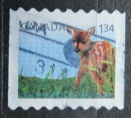 Poštovní známka Kanada 2013 Jelenec bìloocasý Mi# 2929