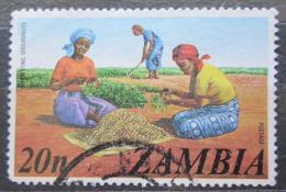 Poštovní známka Zambie 1975 Sklizeò arašídù Mi# 150