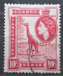 Poštovní známka K-U-T 1954 Žirafa mramorovaná Mi# 93