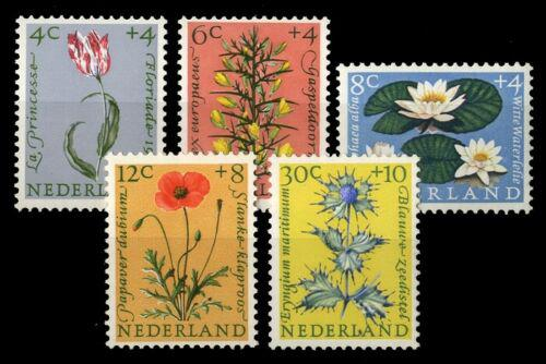 Poštovní známky Nizozemí 1960 Kvìtiny Mi# 746-50 Kat 15€