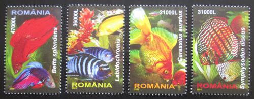 Poštovní známky Rumunsko 2005 Ryby Mi# 5912-15 Kat 9.50€