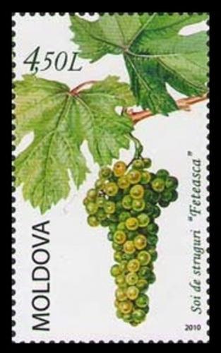 Poštovní známka Moldavsko 2010 Hrozny Mi# 716