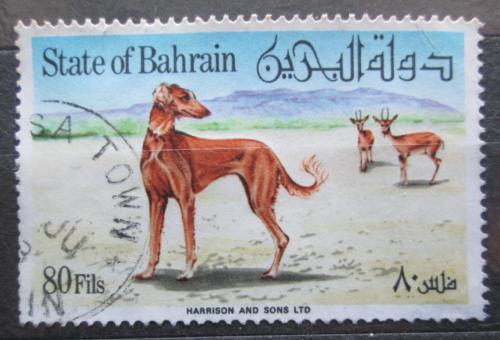 Poštovní známka Bahrajn 1977 Saluki Mi# 268