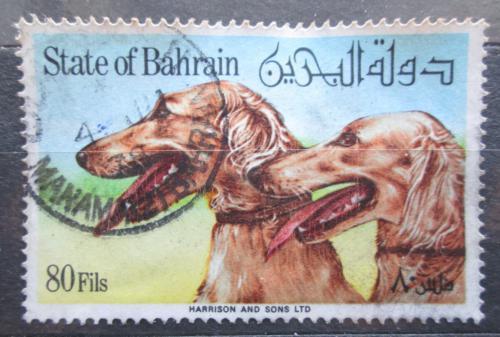 Poštovní známka Bahrajn 1977 Saluki Mi# 271