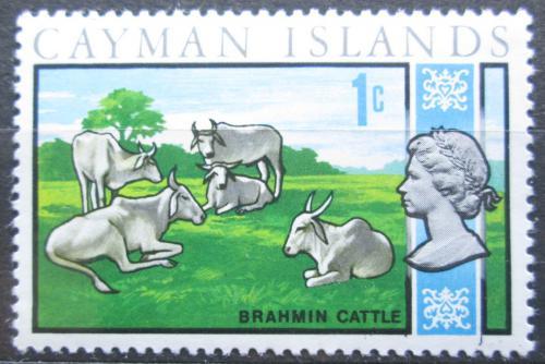 Poštovní známka Kajmanské ostrovy 1970 Zebu Mi# 262
